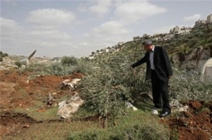 Caption: Israeli settlers uprooted hundreds of olive trees from the lands of al-Khader village, south of Bethlehem, March 20, 2013 (Photo flotillahyves.com).
