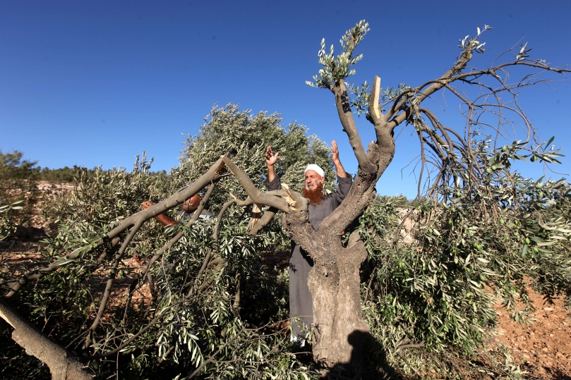 A Palestinian farmer from the village of Twaneih reacts after finding his olive trees destroyed in the southern West Bank village of Yata near Hebron on 08 September 2013. (EPA/ABED AL HASHLAMOUN