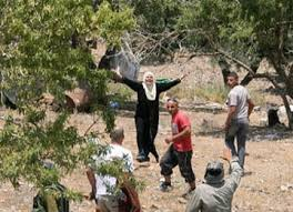 Nablus, February 2013 (MINA) – Dozens of Jewish settlers attacked Palestinian homes in Qasra village, south of Nablus