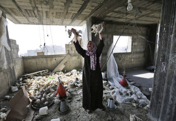 Palestinian Manal Keferna, 30, cries as she holds dead chicks upon her return to the family house destroyed by Israeli strikes in Beit Hanoun, Gaza Strip, Saturday, July 26, 2014. AP Photo/Lefteris Pitarakis)