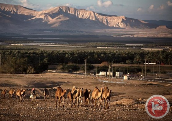 Palestinian land in the Jordan Valley. (Agence France‑Presse/Photo)