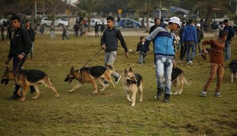 1-dogshow-001
