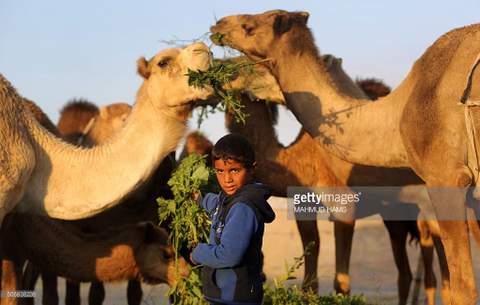 1-bedouin boy