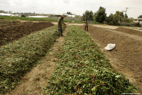 2011_2_3-Palestinian-farmers-work-in-turning-the-household-garbage-and-the-remains-of-plants-into-compost-for-farming-in-stead-of-the-chemical-fertilizers-in-the-southern-Gaza-Stri